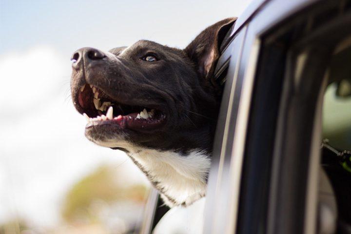 Une plaque d'identification pour mon chien ? A quoi ça sert ?